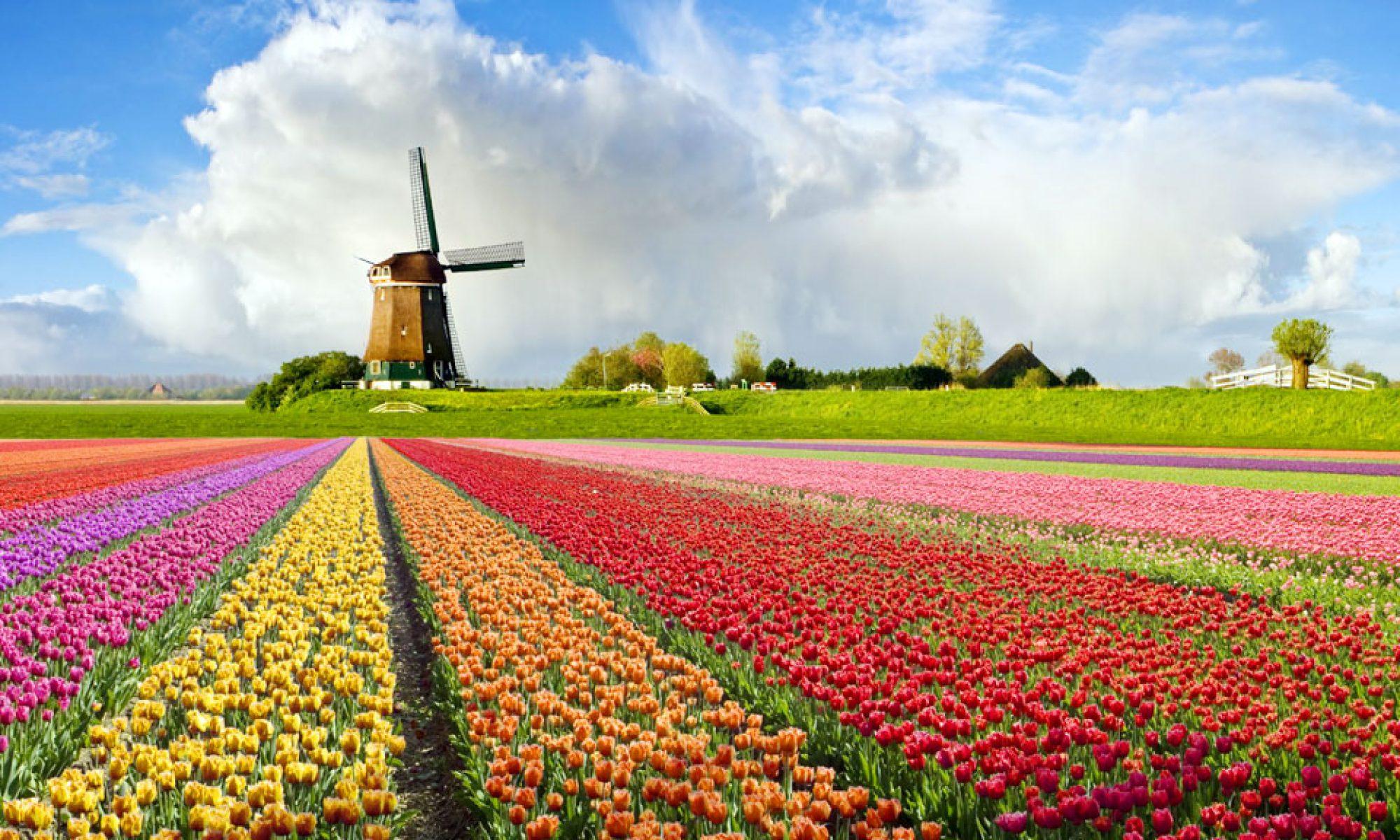 Dutch-Fi